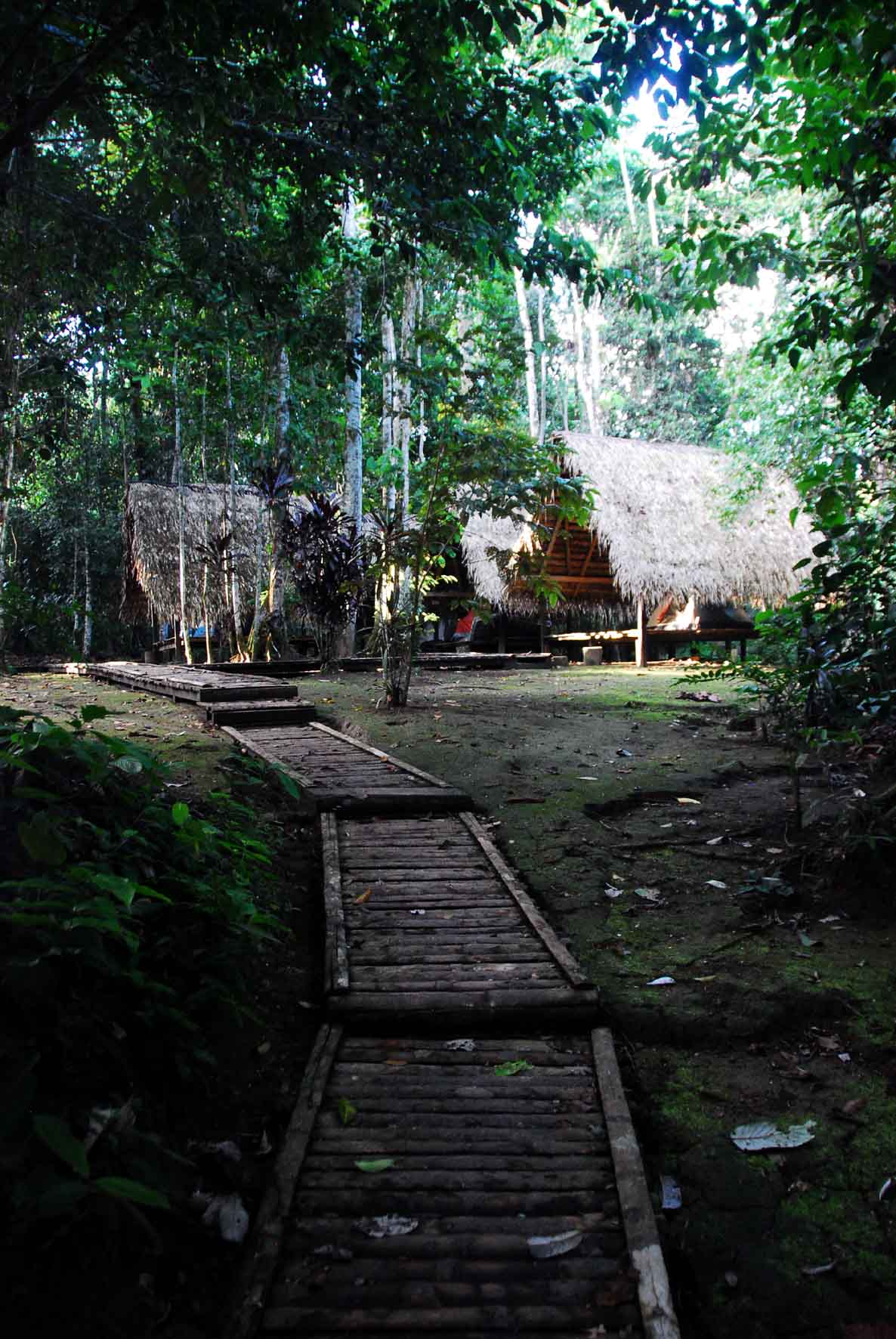 Amazon Jungle - Sani Lodge