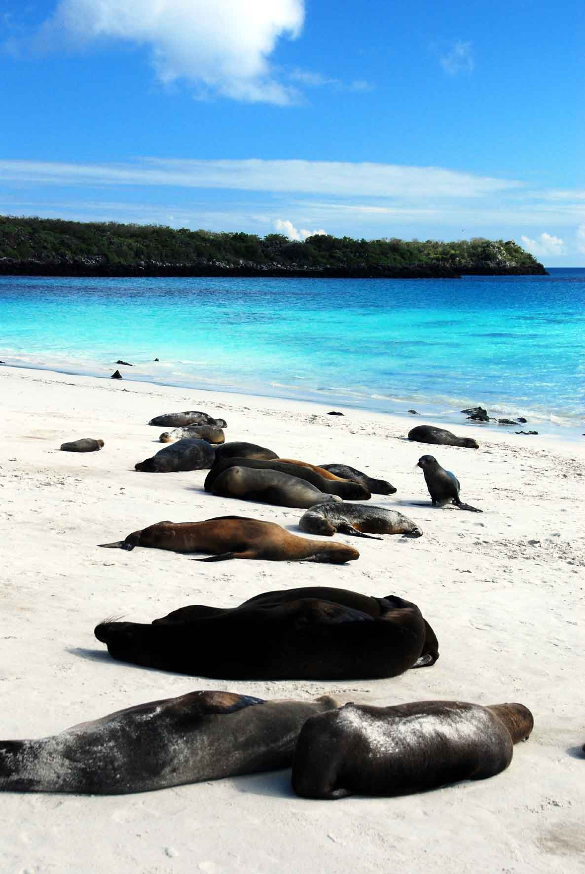 Isla Espanol - Sea Lions Hanging Out on the Beach